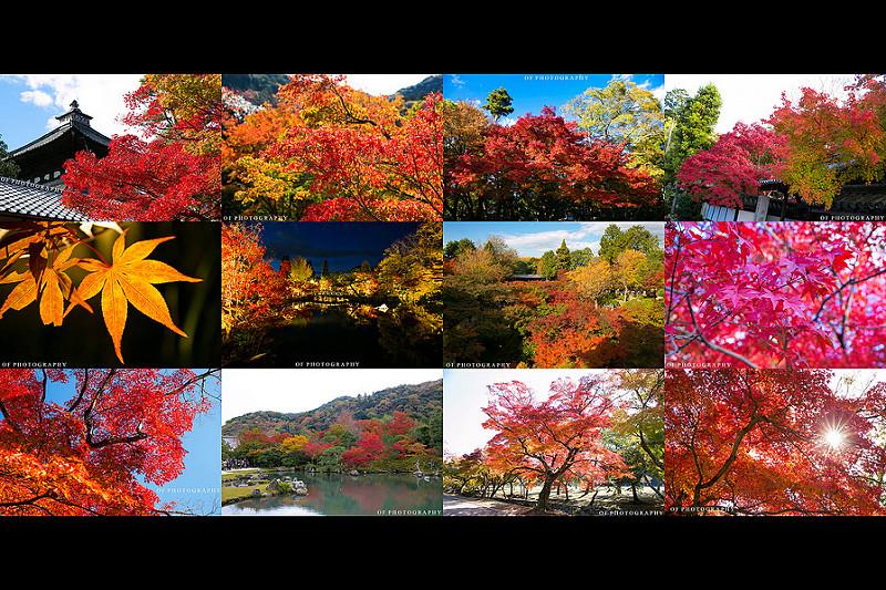 【必看】 2014 日本 京都奈良 賞楓景點心得&照片分享,日楓、夜楓都很美~ 大推!