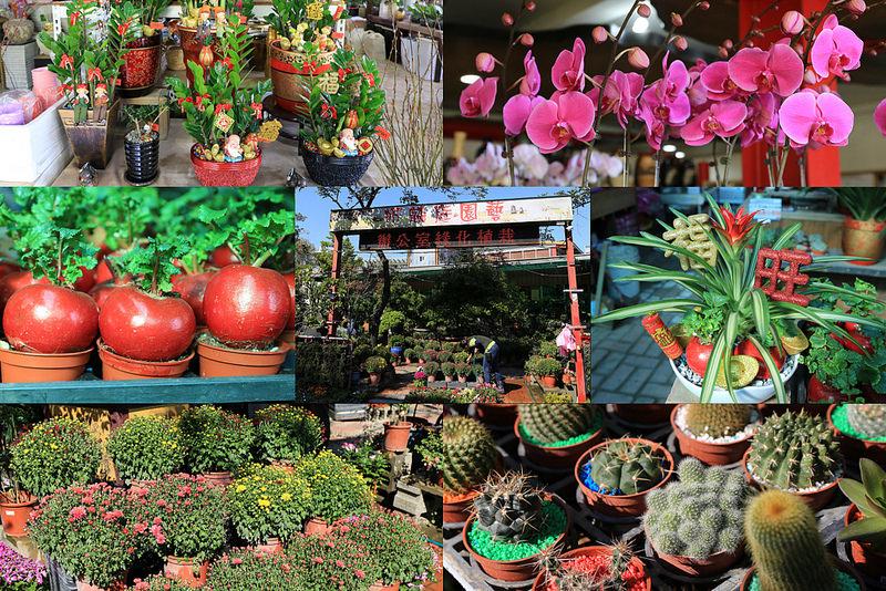 【分享】 台南 昕麟庭園藝 便宜好買的園藝店~過年前必逛!打卡按讚評價送多肉盆栽!
